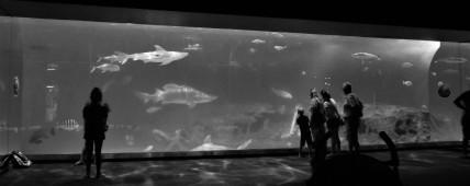 North Carolina Aquarium on Roanoke Island, North Carolina, 2019